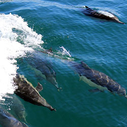 Pacific Nature Tours